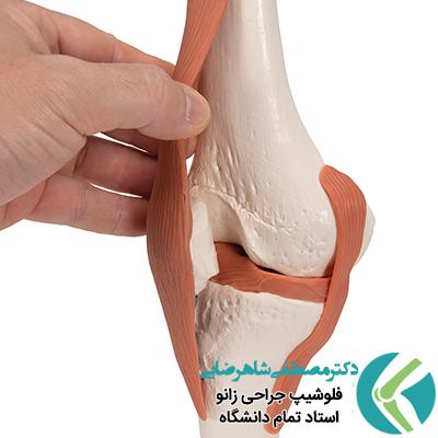 آشنایی با آناتومی مفصل زانو